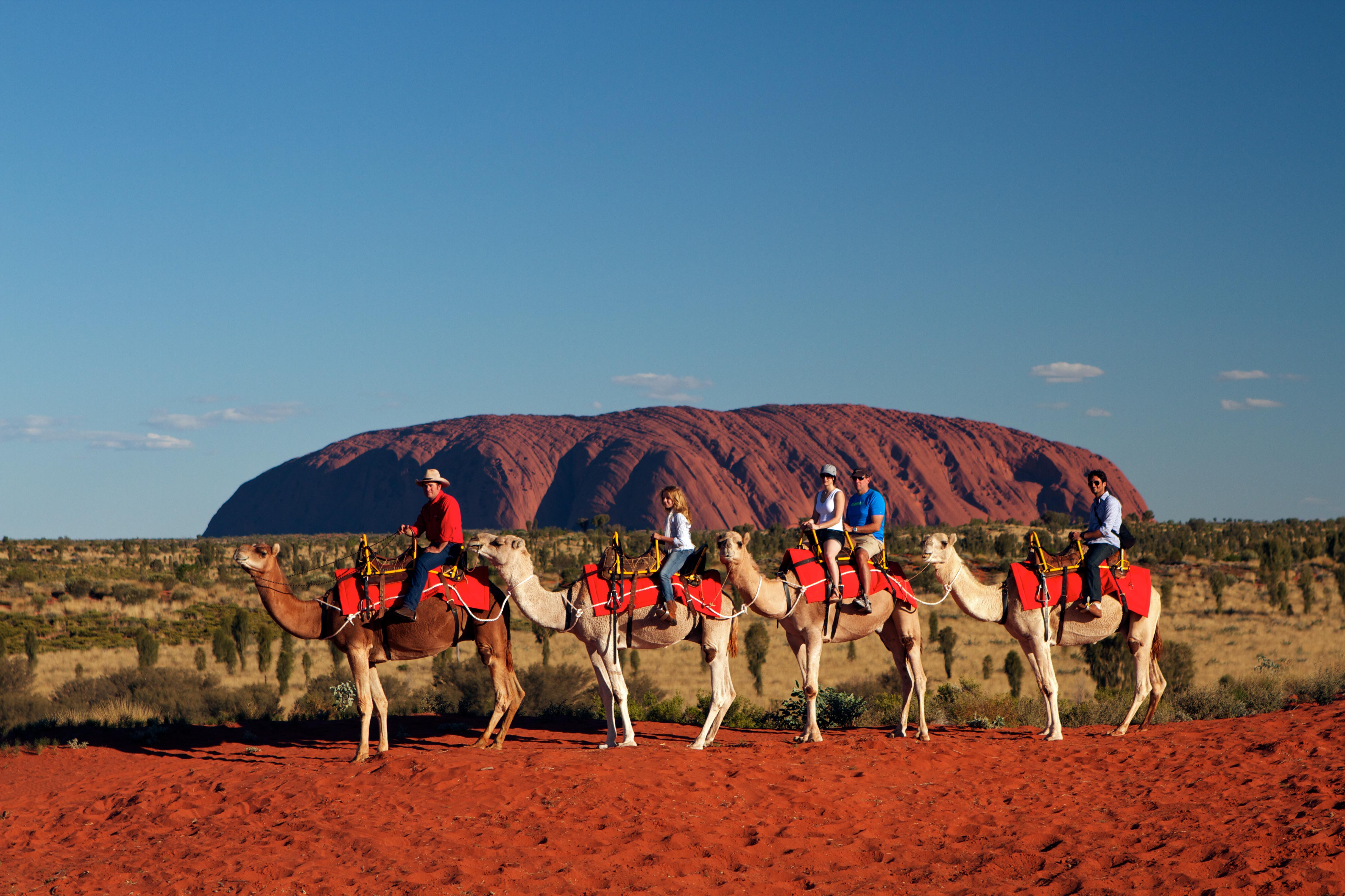 uluru chameaux
