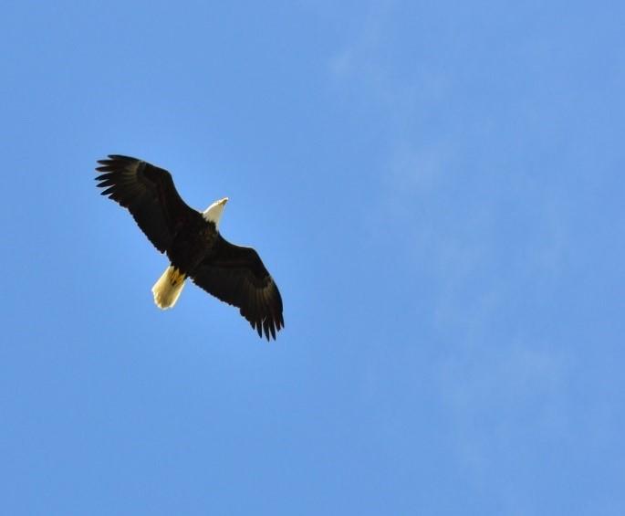 Surprise dans le ciel, nature sauvage canada