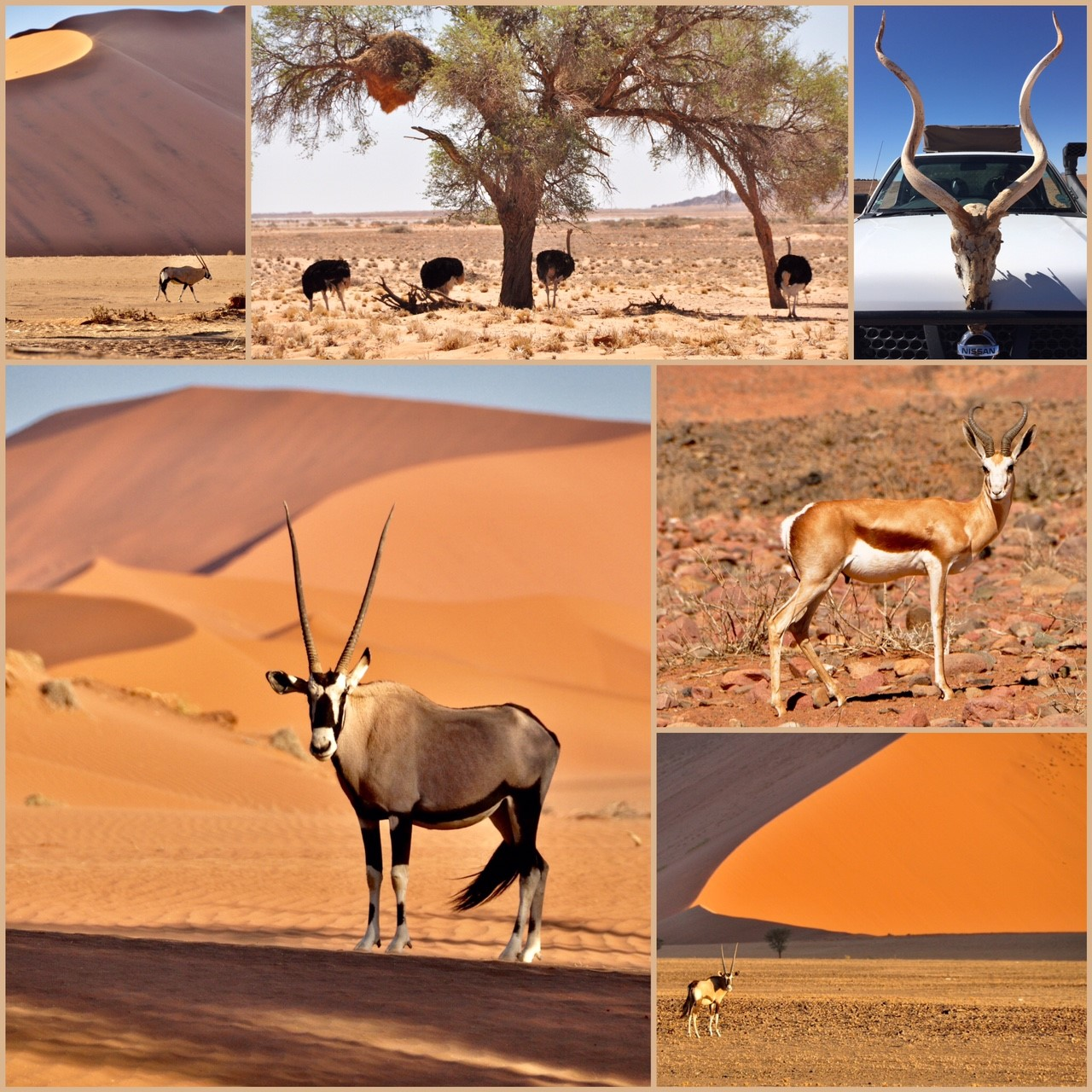 Namibie désert animaux sauvages