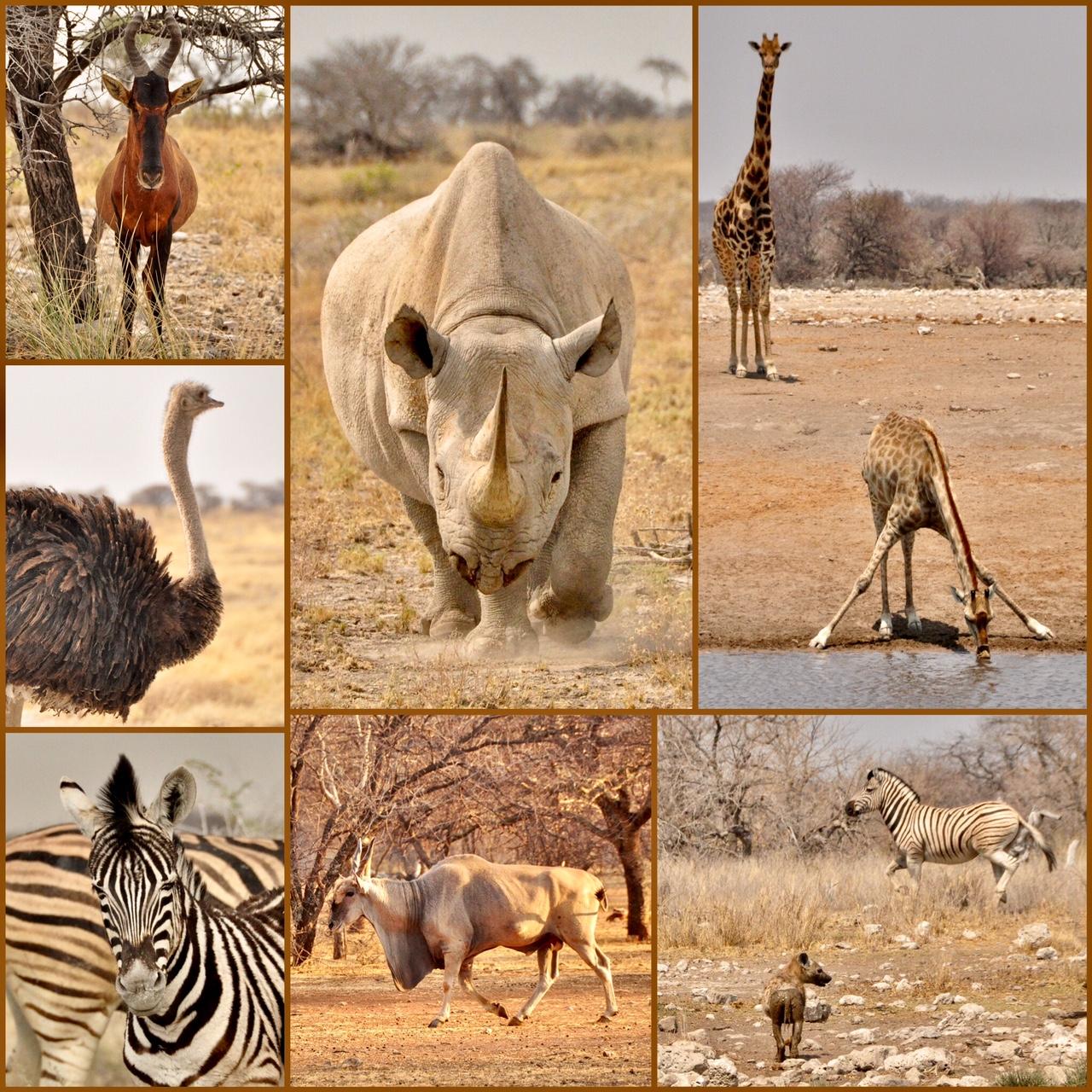 Namibie road trip en 4x4
