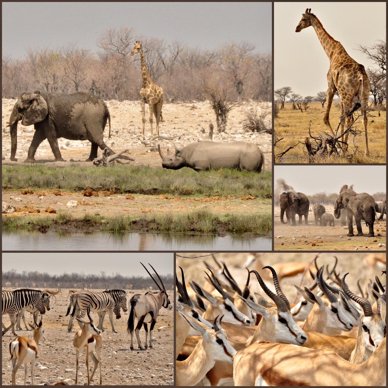 Safari Namibie 4x4
