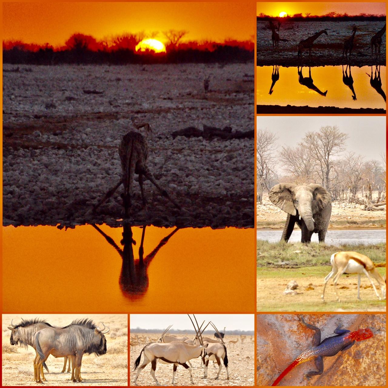 Road trip safari Namibie