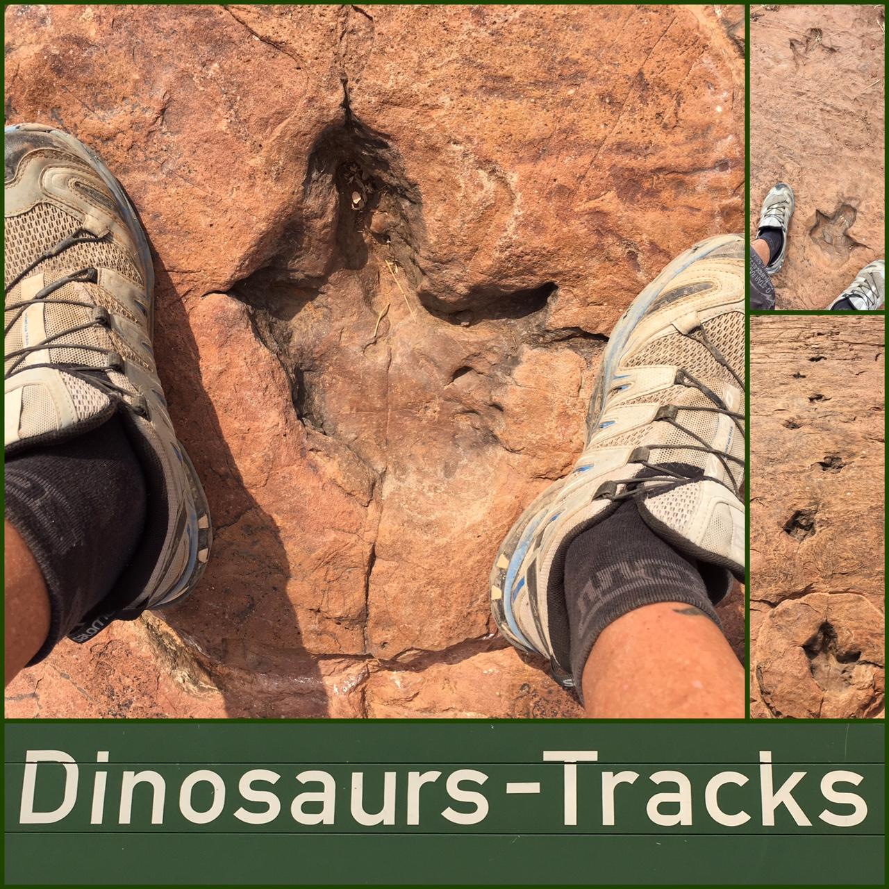 4x4 Namibie dinosaures